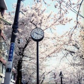 ikanika_haru_05